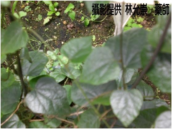 中藥資訊網